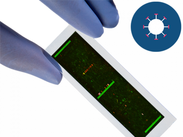 PEPperCHIP® BK Polyomavirus Antigen Microarray