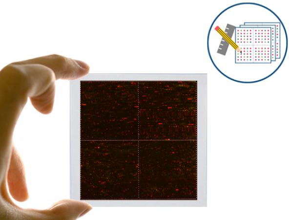 PEPperCHIP® Signature Discovery Microarray